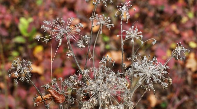 September – Bunt sind schon (bald)  die Wälder