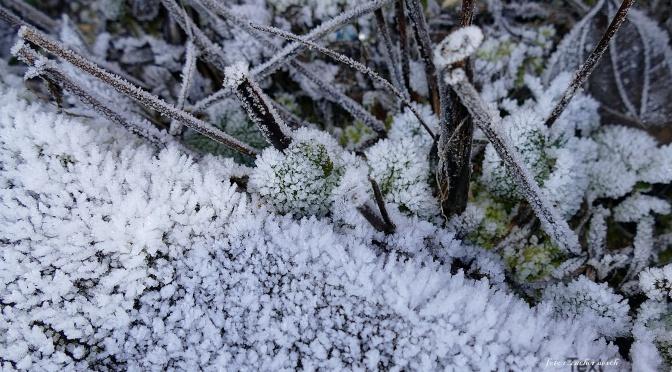 Januar  – es schneielet ganz lysli