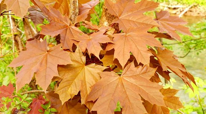 Oktober – viel zu warm, aber wunderschön